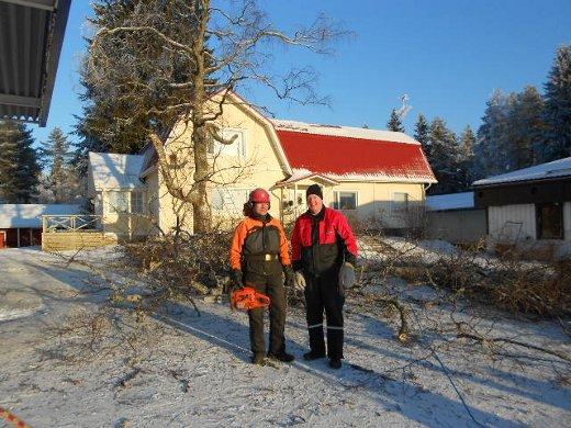 Tässä kuvassa paksu runko on vielä pystyssä ja sahuri Esa Ruottinen vasemmalla vieressään Jukka Suutari.