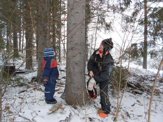 RJa kohta jo innostuttiin tutkimaan puiden runkoja, olisiko niissä linnun koloja