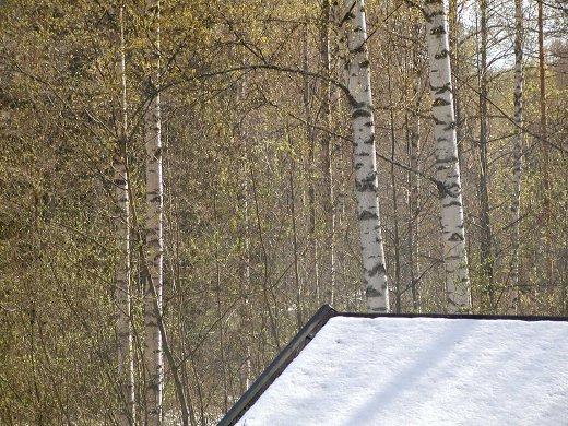 Lunta katolla, vihreää puissa - voisiko olla kauniimpaa?