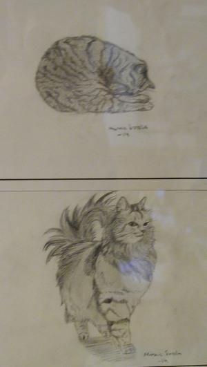 Minna Sorola piirsi kissan.