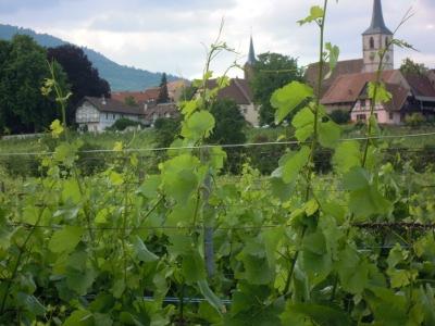 Alsace on kuuluisa viineistään ja viinintuottajakylistään.