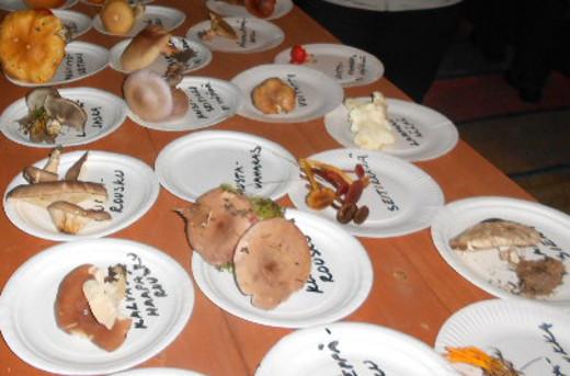 Sienistä koottiin myös näyttely museon tuvan pöydälle.