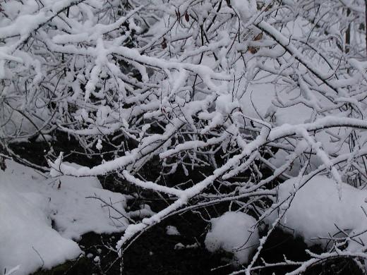 Oksille kasautuva lumi on kaunista, mutta sähköasentajille se on merkinnyt yötöitäkin.
