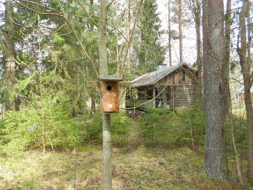 Mäntyperän luontokeskuksessa Savitaipaleella on noin 50 linnunpönttöä pesintää varten.