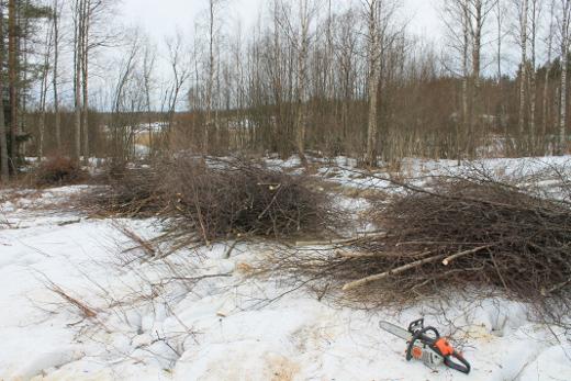 yö alkoi maaliskuun alussa raivauksilla. Kuva ojan suuhun päin, järven suuntaan. Kuva: Markku Peutere