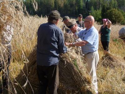 Pentti Lensu (oik.) opasti Rasvanäpeille kuhilaan kokoamista.