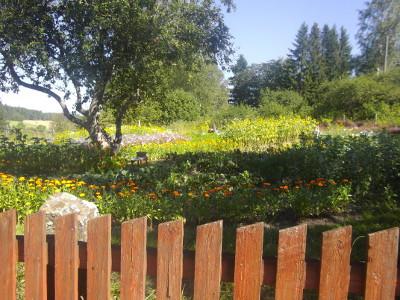 Kehäkukat loistavat tässä kukkamaassa.