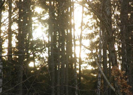 Vaikka aurinko ei korkealle noussutkaan, sen valo miltei sokaisi.