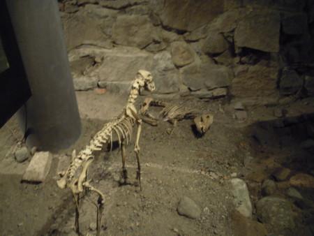 Niinpä pihalla seisoo kovin laihaksi käynyt, vuosisatoja vanha koira ihmettelemässä maassa makavaa porsasta.