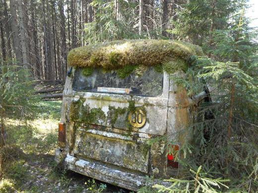 Keväinen kasviretki vei metsään, jossa myös pakettiauto kukkii.