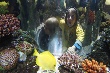 Pienemmät kävijät mahtuvat kuplaan akvaarion keskelle.