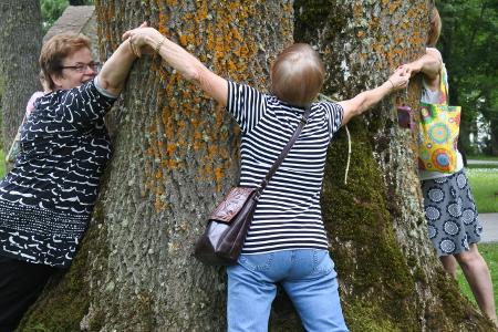 Kartanon puiston puilla on mittaa. Tämän ympärille tarvittiin neljät kädet, muiden muassa Päivi Pokkiselta.