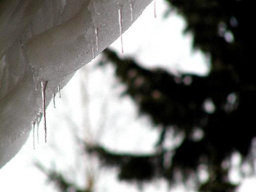 Suojaa, pakkasta, räntää, lunta, aurinkoa... Talvisää ailahtelee ennen kuin kevät keikkuen tulevi.