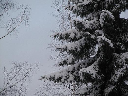 Nyt jo jännätään tuleeko musta vai valkoinen joulu.