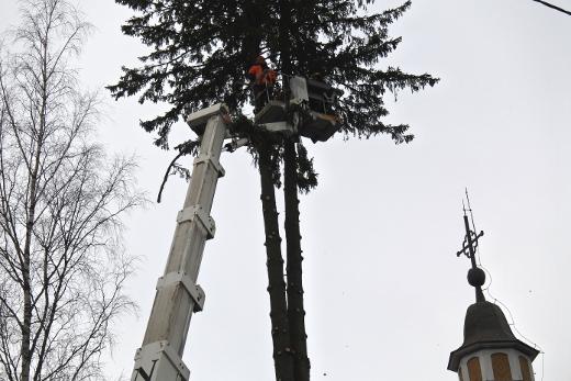 Metsurit eli arboristit karsivat ja katkoivat neljä lähinnä kirkkoa seisonutta isoa kuusta.