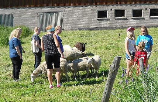 Päivän mittaan tytär Jasmin Jukkara oli vetänyt monta esittelykierrosta tilalla, tässä ollaan lammaslaitumella (kuva 912 ), Jasmin oikealla sinisessä puserossa.