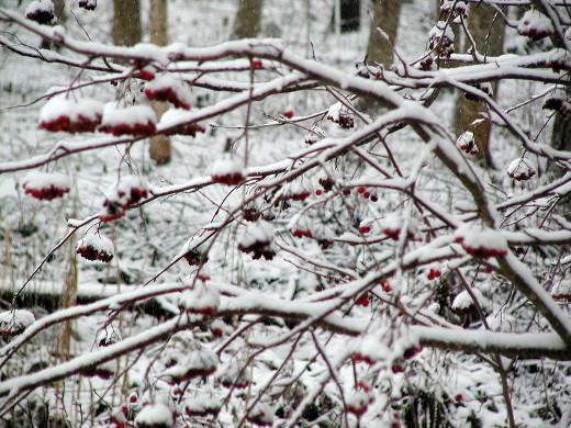 Kalenteriin jäi säilöön lumista tunnelmaa, minkä sunnuntain sade ehti maasta ja puista turmella.