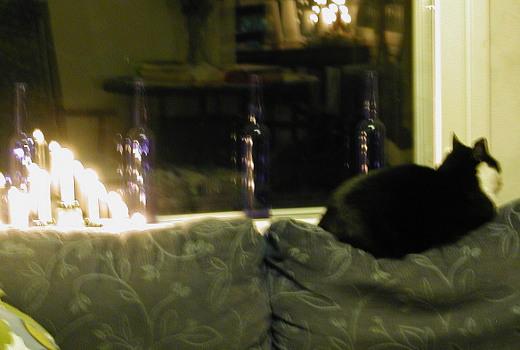 Ulkona on edelleen niin jäinen keli, etteivät kissan kynnetkään pidä.