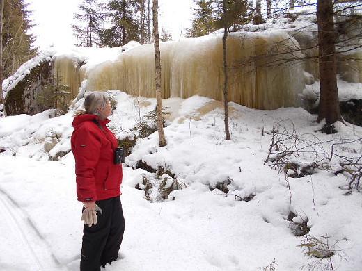 Mäntyperän eukko jääseinämän mittatikkuna Hyrkkäläntien tuntumassa.