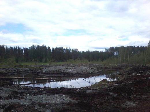 Kelveneenlahden kosteikko on lähellä Papinojaa.