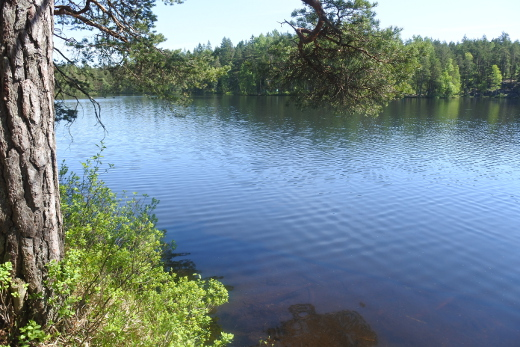 Nuuksion kansallispuistossa Espoossa voisi kuvitella olevansa kauempanakin pääkaupungista.