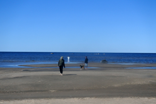 Vattajanniemi Kokkolan liepeillä tarjoaa kilometrikaupalla hiekkarantaa.