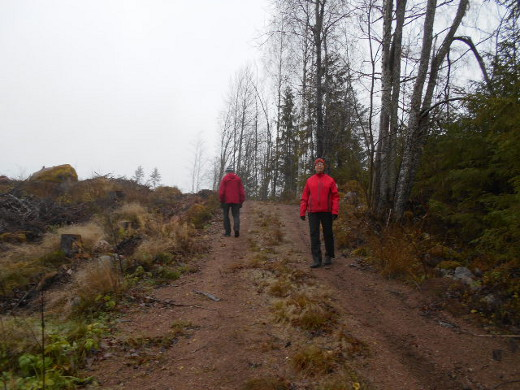 Reitti vei metsäautotietä pienen mäen harjalle.