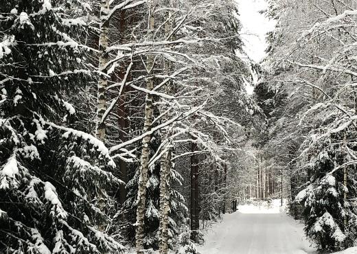 Lumiset kuuset suojaavat Kesämäentietä.