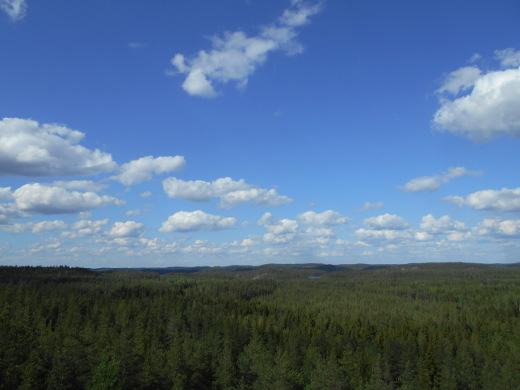 Elfingin tornista Valkealan Repovedellä avautuu loputon metsämaisema.