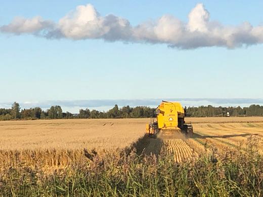 Kotimatkallakin aurinko paistoi. Limingan pelloilla puitiin viljaa lauantai-iltana.