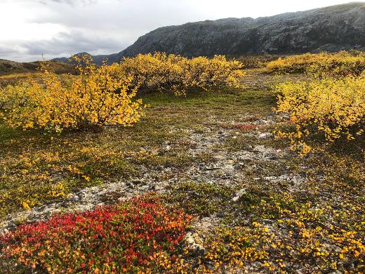 Tundralla hehkuivat kaikki ruskan värit.