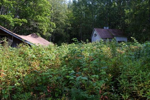 Tältä pihamaa, talo ja aitta näyttivät kesällä 2016.