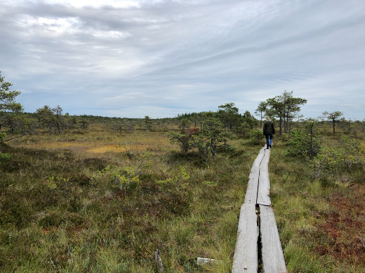 Valkmusan kansallispuistossa Pyhtäällä riittää pitkospuita talsittaviksi ja suota haisteltavaksi ja katseltavaksi.