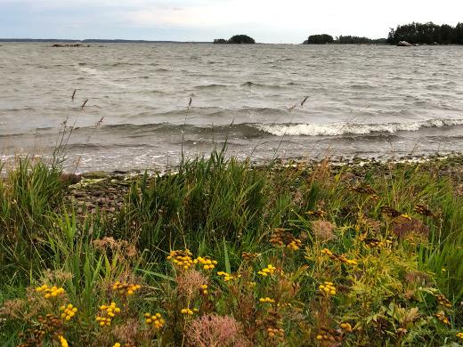 Pyhtään rannoille löivät Suomenlahden aallot.