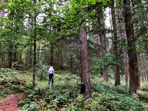 Kotimatkalla oli hyvä verrytellä jalkoja vielä Mustilan arboretumissa Elimäellä.