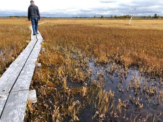 Ruska loisi jo Ilmakkiaavalla Sodankylässä, nelostien varressa.